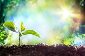 Green Medicine Image