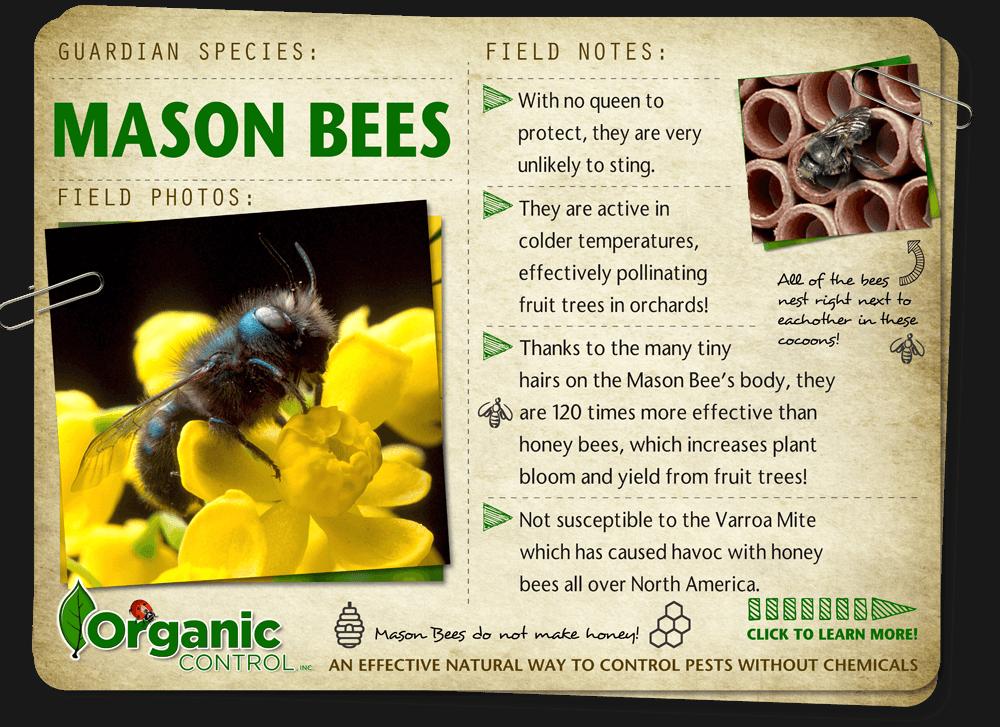 http://organiccontrol.com/mason-bees/