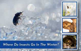 a photo of an insect on ice with three small square images of insects in the winter
