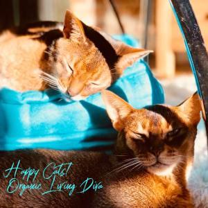 Happy Cats