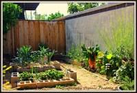 My Mini-Backyard Garden | Sustainably Organic Phoenix