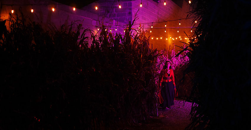 Fairy at the end of the harvest tunnel