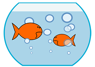 Image of two goldfish swimming in a bowl