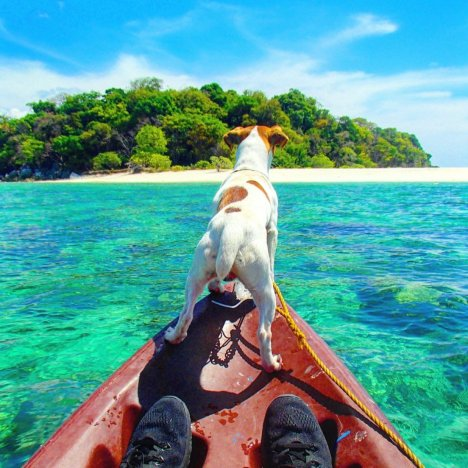 Galit the boat dog on the Tao Philippines sailing trip from El Nido to Coron