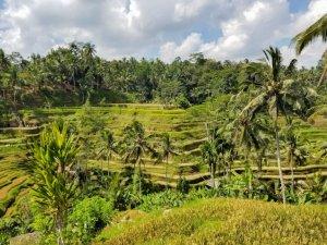 Tegalalang Rice Terraces Bali Indonesia
