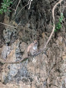 Monkey Island Phi Phi Islands Thailand