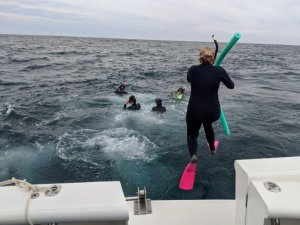 Jumping in to swim with manta rays in Western Australia