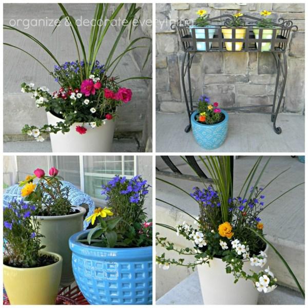 Flower Pot Ideas for Front Porch Planters