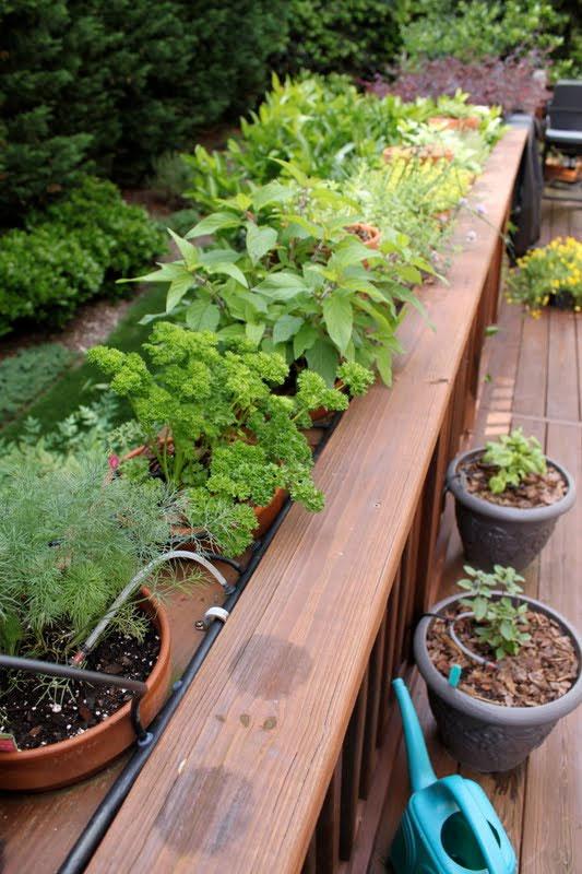 herb rack