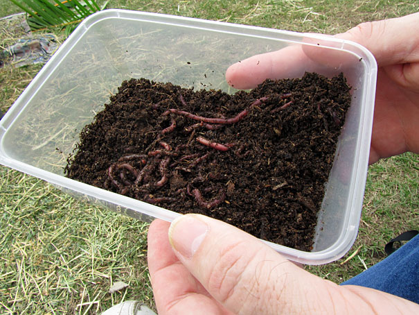 worms for a worm farm