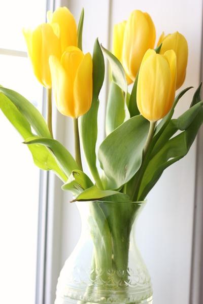 pretty tulip favorites