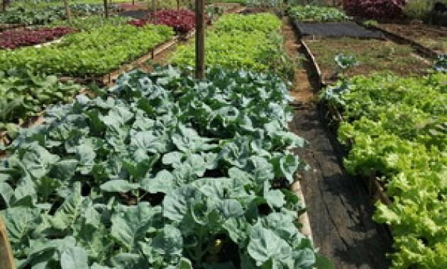 Sayur organik di malang