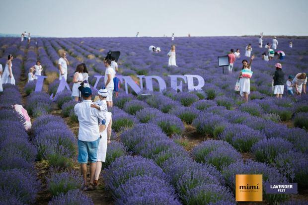 lavender fest 6