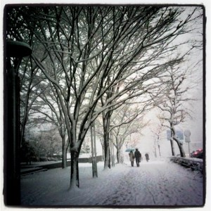 雪の名古屋と並木とカップル