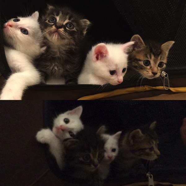 子猫の写真の比較