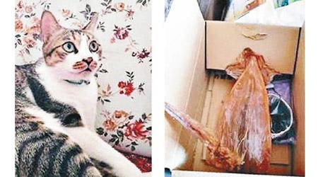 中華趣聞:小貓報恩叼魷魚 主人哭笑不得 - 東方日報