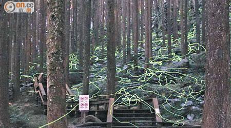 阿里山冬螢季節 - 東方日報