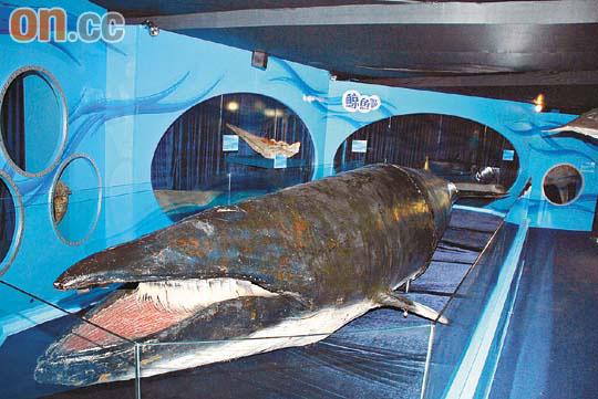 奇妙海底世界看珍貴標本 - 東方日報