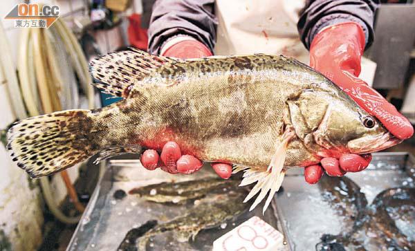 15種鹹淡水魚含更毒PFOS - 東方日報
