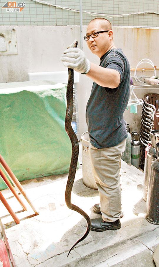 毒蛇闖赤柱酒吧後門 - 東方日報