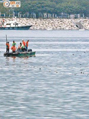 死魚蝦潮湧新界 - 東方日報