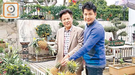 政情:梁福元鍾意菠蘿 種到成屋「金叵羅」 - 東方日報