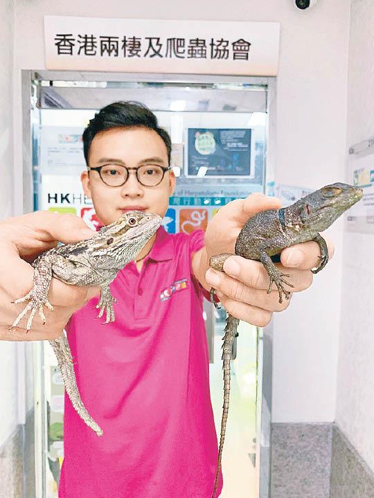 兩蜥蜴遭遺棄路邊草叢 - 東方日報