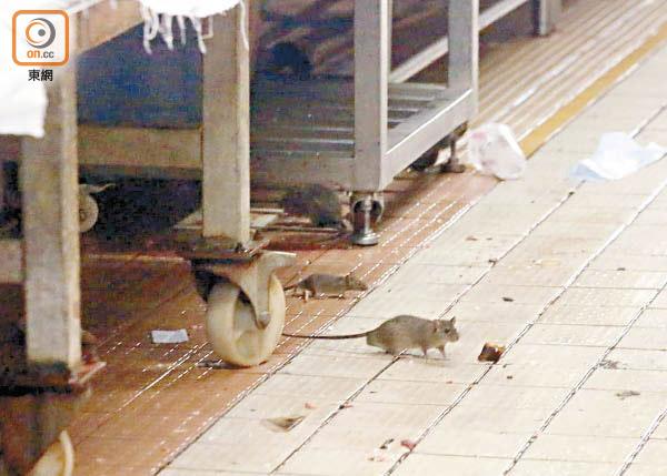 食署做騷當補鑊 街市老鼠四圍撲 - 東方日報
