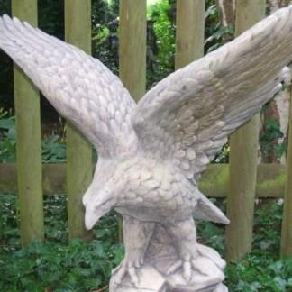 Adler Aquila auf Felsen