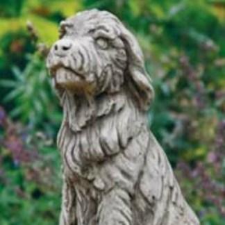 Hund Border Collie sitzend