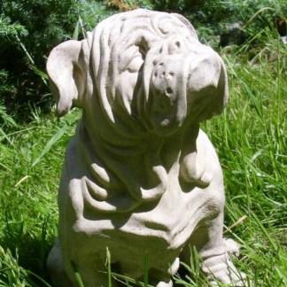 Hund Bulldogge Rufus