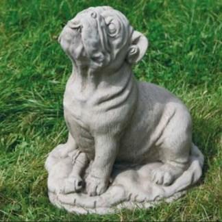 Hund Bulldogge gross