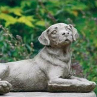 Hund Labrador liegend