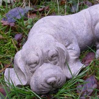 Hund Rufi schlafend - Hund Rufi schlafend