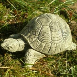 Schildkröte klein - Schildkröte klein