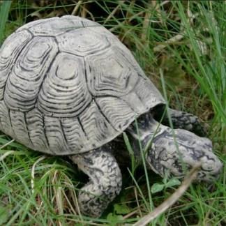 Schildkröte mittel