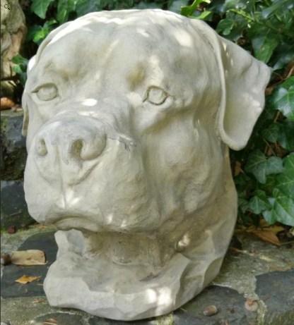 Hund Hundekopf Rottweiler2