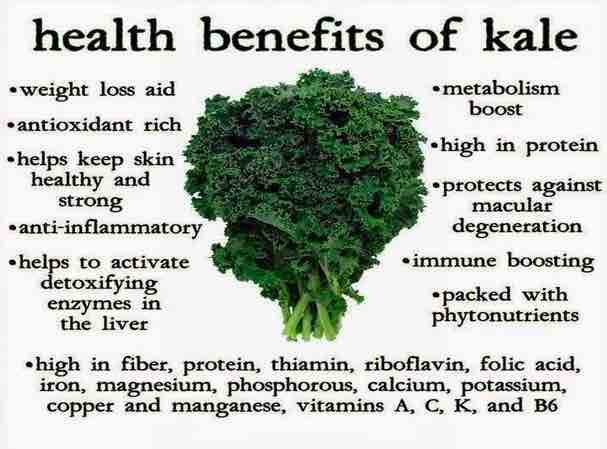Is Kale Good For you ? Kale Benefits and Effects on Health main