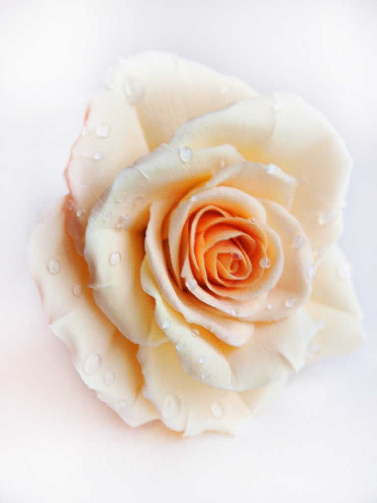 Ivory Rose Hair Pin Handmade Flowers Oriflowers