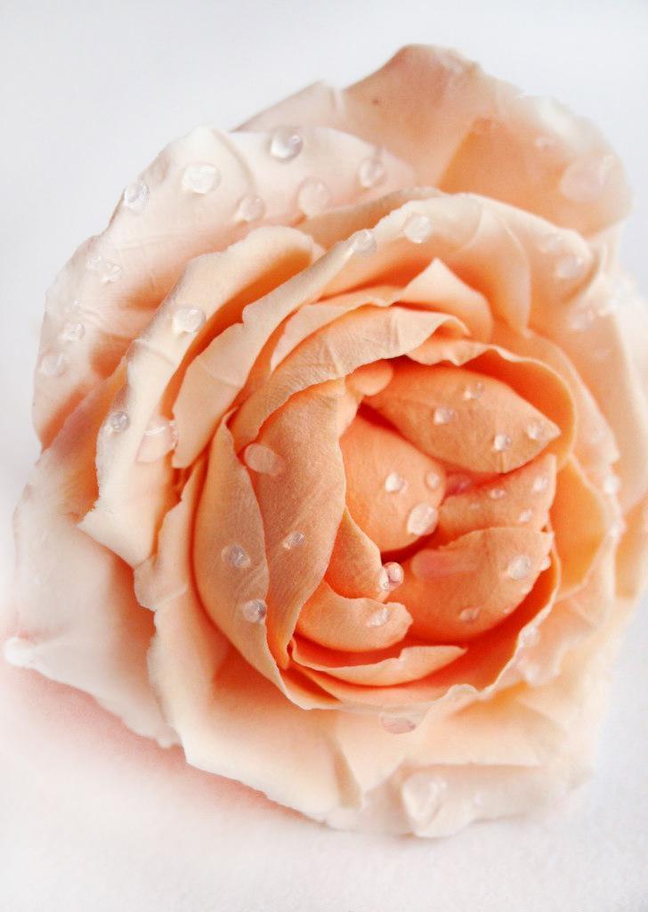 Wedding Flower Hair Accessories