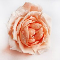 Wedding Flower Hair Accessories - Artificial Flowers ...