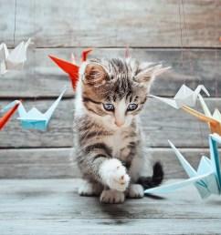 3d origami fox diagram [ 1600 x 1067 Pixel ]