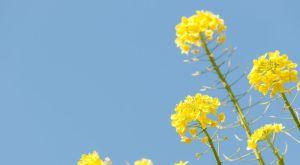 春の季語の一覧 – 季節の美しい言葉