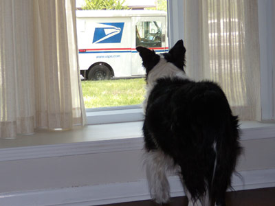 Image result for dog at door waiting for mailman