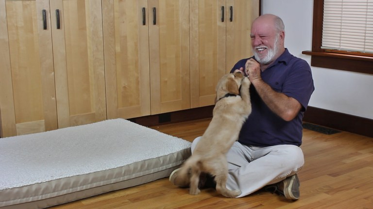 How to Train Your Dog – Are Dog Training Books Or DVDs Worth it?
