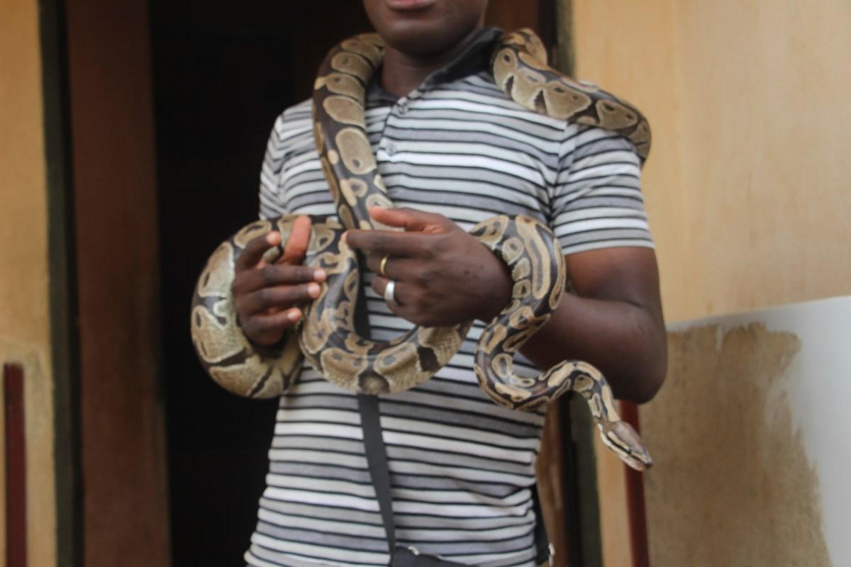 Le Temple des Pythons de Ouidah