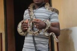 Le Temple des Pythons