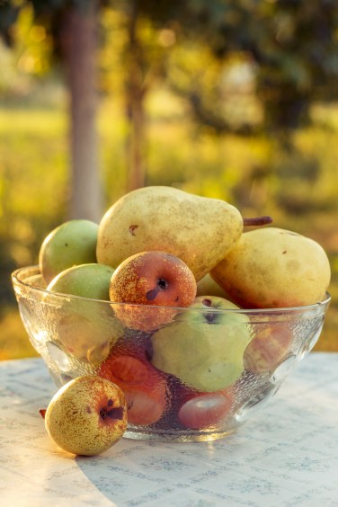 Plodovi ljeta.