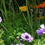 【花の名は。】三宮の花壇