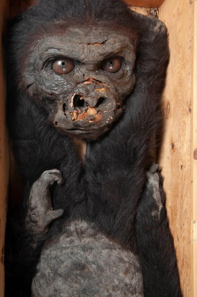 Baby Kong - foto Antonio Idini, Rambaldi Meccanica Mostri Palazzo Esposizioni
